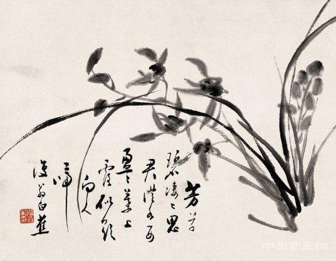 白蕉兰花欣赏